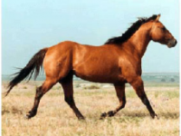 Montenero Val Cocchiara, mai ritrovate carcasse di cavalli